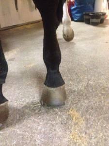 sparkskada hest før lys